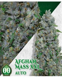 Auto Afghan Mass XXL 00 Seeds Outlet