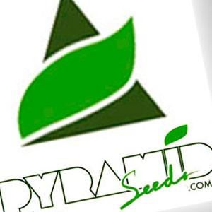 Imagen de Pyramid Seeds