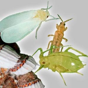 Insecticidas polivalentes
