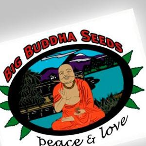 Imagen de Big Buddha Seeds