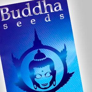 Imagen de Buddha Seeds