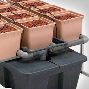 Cultivo en Hidropónico