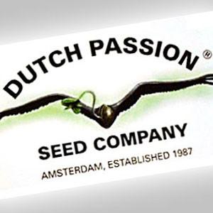 Imagen de Dutch Passion