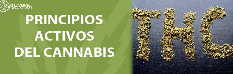 THC, CBD, CBN, etc…Principios activos del cannabis