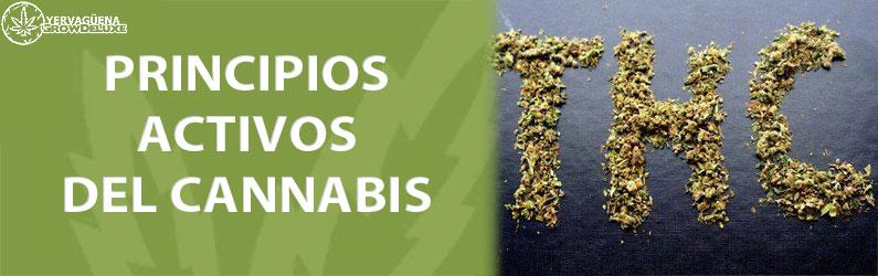 sustancias psicoactivas de la marihuana