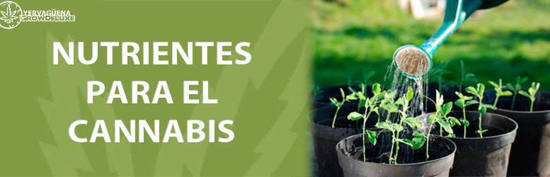 Nutrientes para las plantas de marihuana