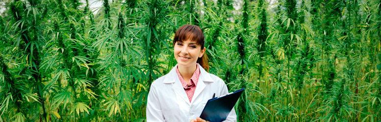 Cómo abonar en la fase de floracion del cultivo de marihuana