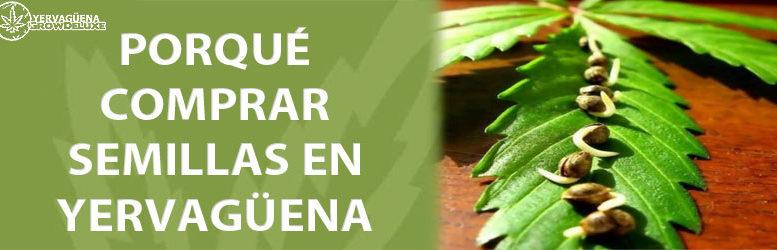 Razones por las que comprar semillas de marihuana en Yervagüena
