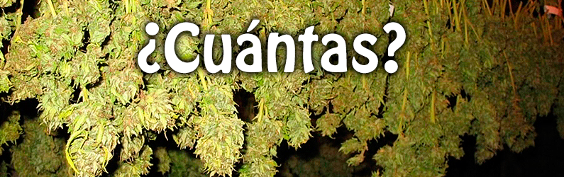 cuantas plantas marihuana casa