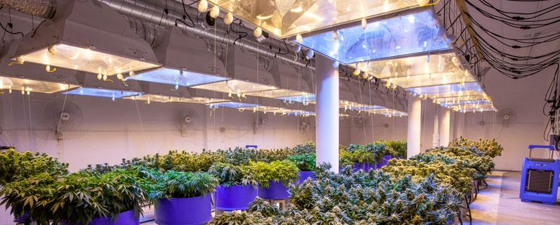 iluminacion cultivo comercial