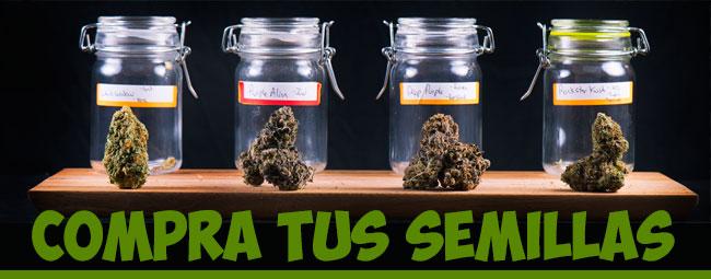 comprar semillas de marihuana