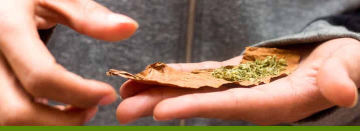 haciendo porro marihuana