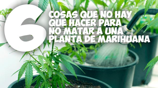 6 cosas para no hacer para no matar una planta de marihuana for Plantas marihuana interior
