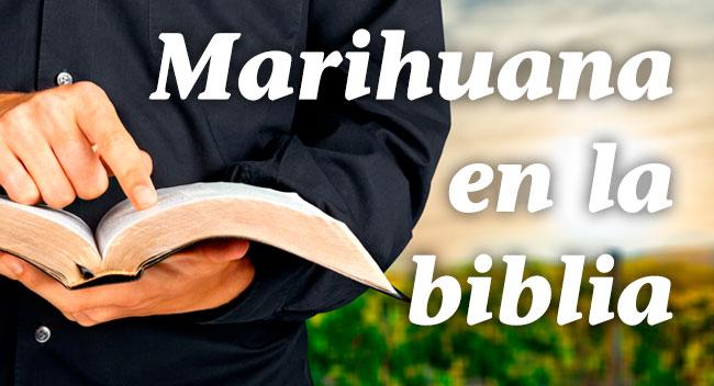 Marihuana En La Biblia Historia Del Cannabis En Nuestro Blog