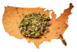 map uses marijuana buds