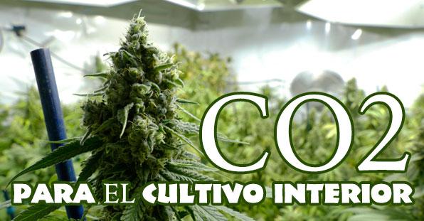 Cómo usar el CO2 en el cultivo de marihuana