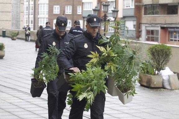 tráfico ilegal marihuana en españa