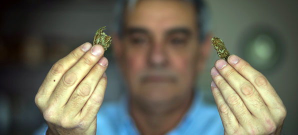 E.van den Eyde del PP con dos cogollos de marihuana