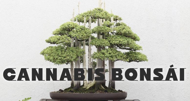 Cómo hacer un bonsái de cannabis