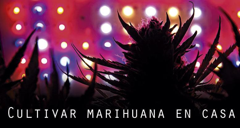 Cultivar marihuana en tu propia casa
