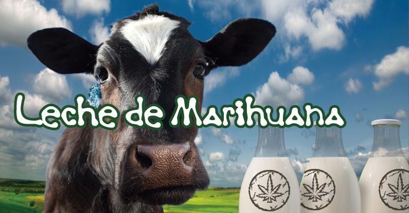 receta leche cannabis